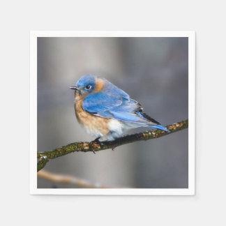Eastern Bluebird on Ice Covered Limb Paper Napkin