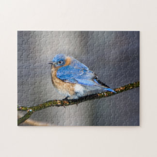Eastern Bluebird on Ice Covered Limb Puzzle
