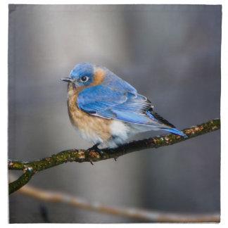 Eastern Bluebird on Limb Cloth Napkin