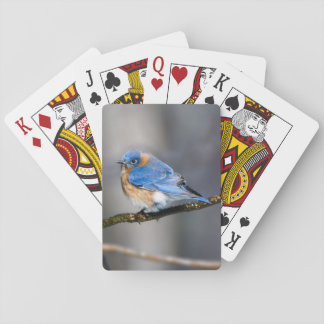 Eastern Bluebird on Limb Playing Cards