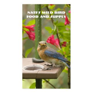 Eastern Bluebird Pack Of Standard Business Cards