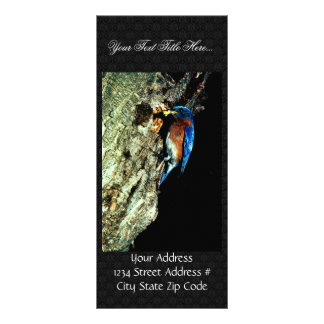 Eastern Bluebird Personalized Rack Card