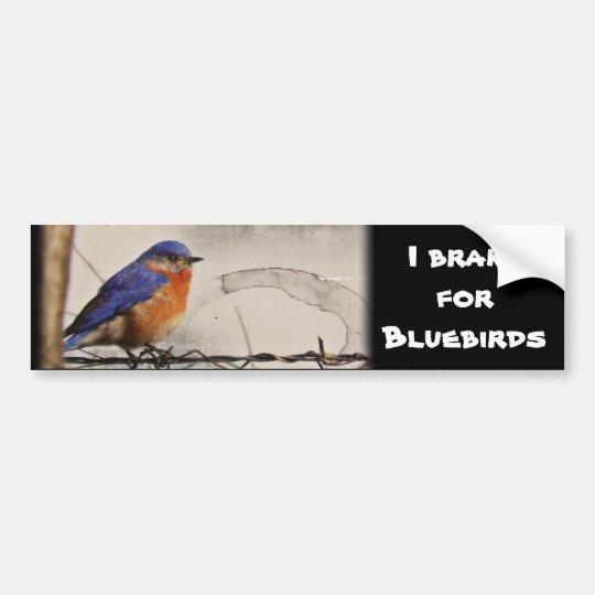 Eastern Bluebird Photo Bumper Sticker