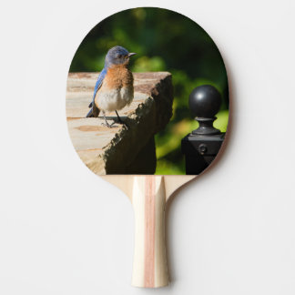 Eastern Bluebird Ping Pong Paddle