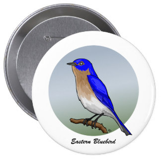 Eastern Bluebird rev 2 0 Buttons and Flair