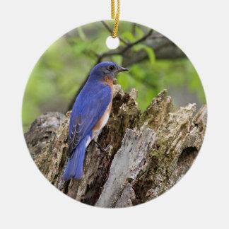 Eastern Bluebird Round Ceramic Decoration