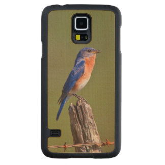 Eastern Bluebird (Sialia Sialis) Adult Male 2 Carved Maple Galaxy S5 Case
