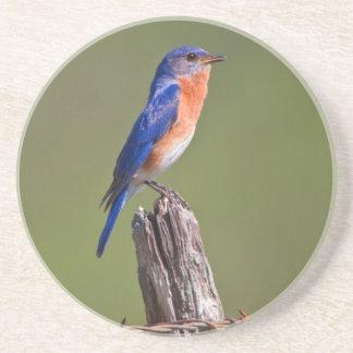 Eastern Bluebird (Sialia Sialis) Adult Male 2 Coaster