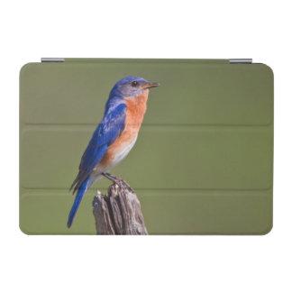Eastern Bluebird (Sialia Sialis) Adult Male 2 iPad Mini Cover