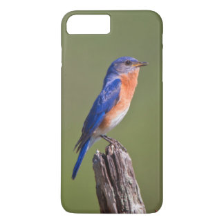 Eastern Bluebird (Sialia Sialis) Adult Male 2 iPhone 8 Plus/7 Plus Case