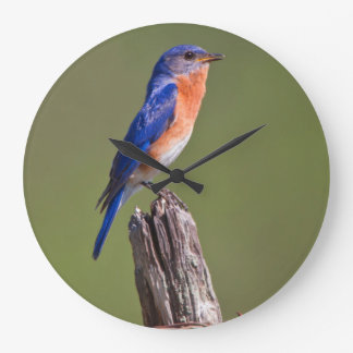 Eastern Bluebird (Sialia Sialis) Adult Male 2 Large Clock