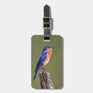 Eastern Bluebird (Sialia Sialis) Adult Male 2 Luggage Tag