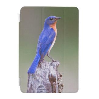 Eastern Bluebird (Sialia Sialis) Adult Male iPad Mini Cover