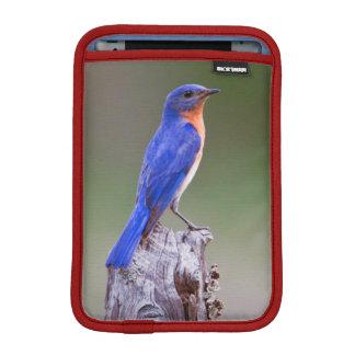 Eastern Bluebird (Sialia Sialis) Adult Male iPad Mini Sleeve