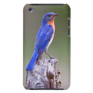 Eastern Bluebird (Sialia Sialis) Adult Male iPod Case-Mate Cases
