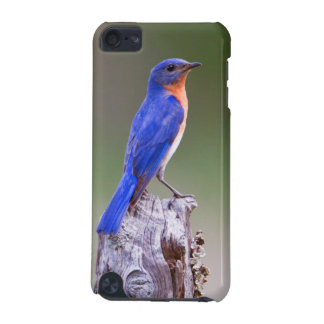 Eastern Bluebird (Sialia Sialis) Adult Male iPod Touch 5G Cover