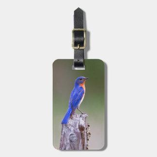 Eastern Bluebird (Sialia Sialis) Adult Male Luggage Tag