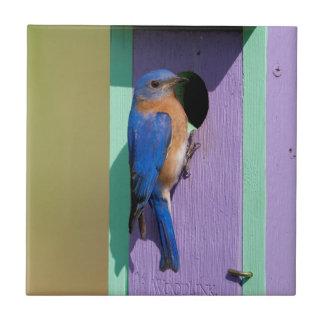 Eastern Bluebird Tile