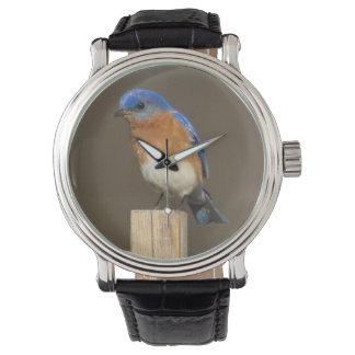 Eastern Bluebird Watch