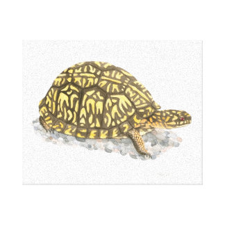 Eastern Box Turtle Canvas Print