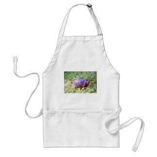 Eastern Box Turtle Louisiana Standard Apron