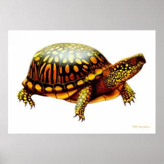 Eastern Box Turtle Print