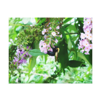 Eastern Carpenter Bee on Salvia flower Canvas Print