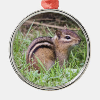 Eastern Chipmunk Christmas Ornament