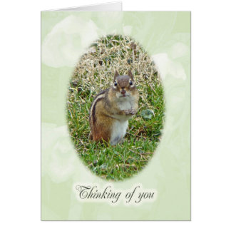 Eastern Chipmunk - Thinking of You Card