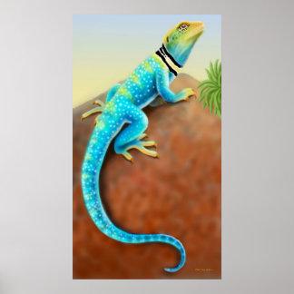 Eastern Collared Lizard Poster