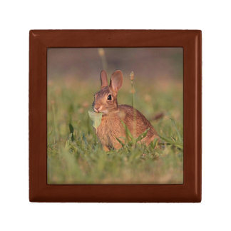 Eastern Cottontail Rabbit Gift Box