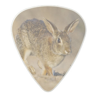 Eastern cottontail rabbit hopping acetal guitar pick
