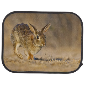 Eastern cottontail rabbit hopping car mat