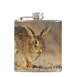 Eastern cottontail rabbit hopping hip flask