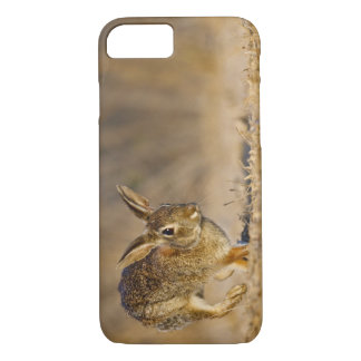 Eastern cottontail rabbit hopping iPhone 7 case