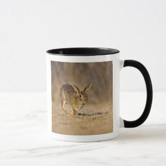 Eastern cottontail rabbit hopping mug