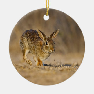 Eastern cottontail rabbit hopping round ceramic decoration
