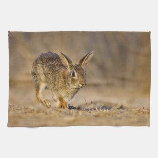 Eastern cottontail rabbit hopping tea towel
