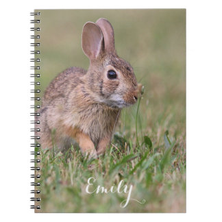 Eastern Cottontail Rabbit Notebooks
