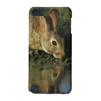 Eastern Cottontail, Sylvilagus floridanus, 2 iPod Touch 5G Cases