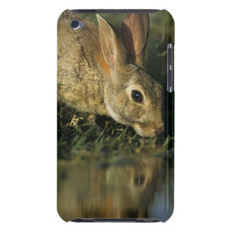 Eastern Cottontail, Sylvilagus floridanus, 2 iPod Touch Cases