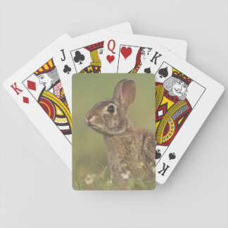Eastern Cottontail, Sylvilagus floridanus, 3 Playing Cards