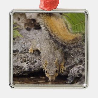 Eastern Fox Squirrel, Sciurus niger, adult 2 Christmas Ornament