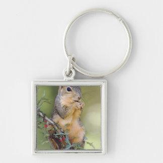 Eastern Fox Squirrel, Sciurus niger, adult Silver-Colored Square Key Ring
