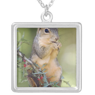 Eastern Fox Squirrel, Sciurus niger, adult Silver Plated Necklace