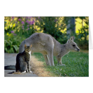 Eastern gray kangaroo and cat, Australia fl Card