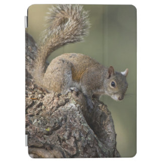Eastern Gray Squirrel, or grey squirrel iPad Air Cover