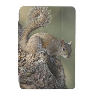 Eastern Gray Squirrel, or grey squirrel iPad Mini Cover
