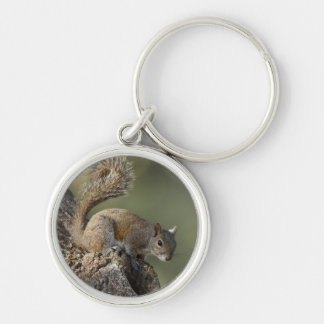 Eastern Gray Squirrel, or grey squirrel Key Ring