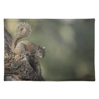 Eastern Gray Squirrel, or grey squirrel Placemat